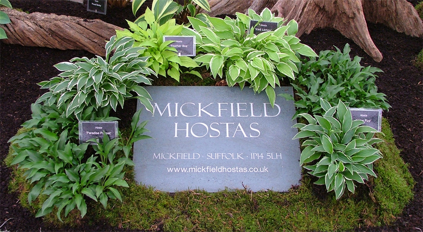 Mickfield Hostas The Largest National Collection Of Hosta In The Uk